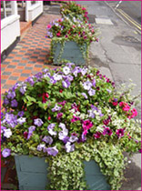 CARPETS OF BLOOMS FOR WEY HILL, HASLEMERE!